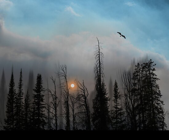 1985 by peter holme III