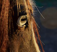 Glass Eye by Nahaldnin