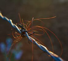 Hair on the wire by Nahaldnin