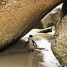 Jackass Penguin by skaranec1981