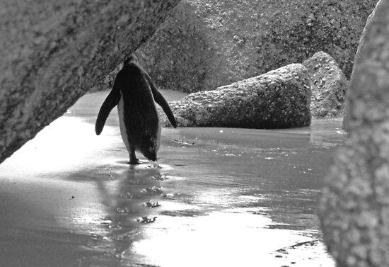 Media Shy Penguin by skaranec1981