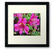 Pinky Purple Framed Print