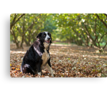 On a bed of leaves Canvas Print