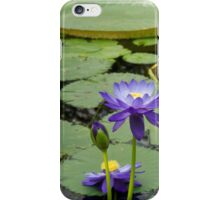 Exotic Lily iPhone iPhone Case/Skin
