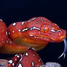 Cheeky Red baby GTP by Angi Wallace
