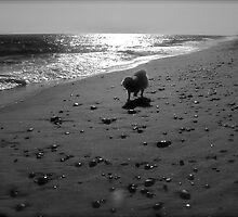 Sylvie Runs Down the Abandoned Beach  by Jack McCabe