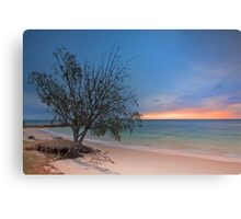 The Seaside Tree - Amity Pt  North Stradbroke Island Qld Australia Canvas Print