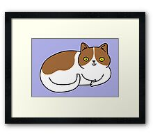 Special Cat... Brown and White Framed Print