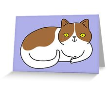 Special Cat... Brown and White Greeting Card