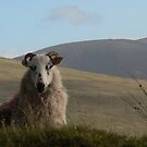 """ You Lookin at Me "" Comeragh Mountains,Co.Waterford,Ireland. by Pat Duggan"