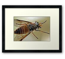 Attack of the Giant March Fly Framed Print