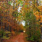 Autumn Trails by Ruth Lambert