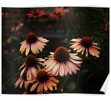 Echinacea Flowers - High Line Park - New York City Poster