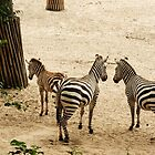 Stripes... Zebra Family by steppeland