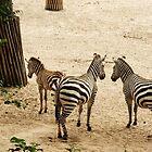 Stripes... Zebra Family by steppeland