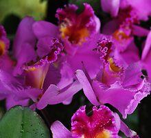 Purple'ism by Joel Fourcard