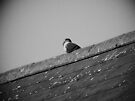 Lone Pigeon on a Roof by Artberry
