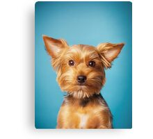 Cute Terrier on blue background Canvas Print