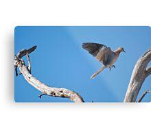 leaping dove Metal Print