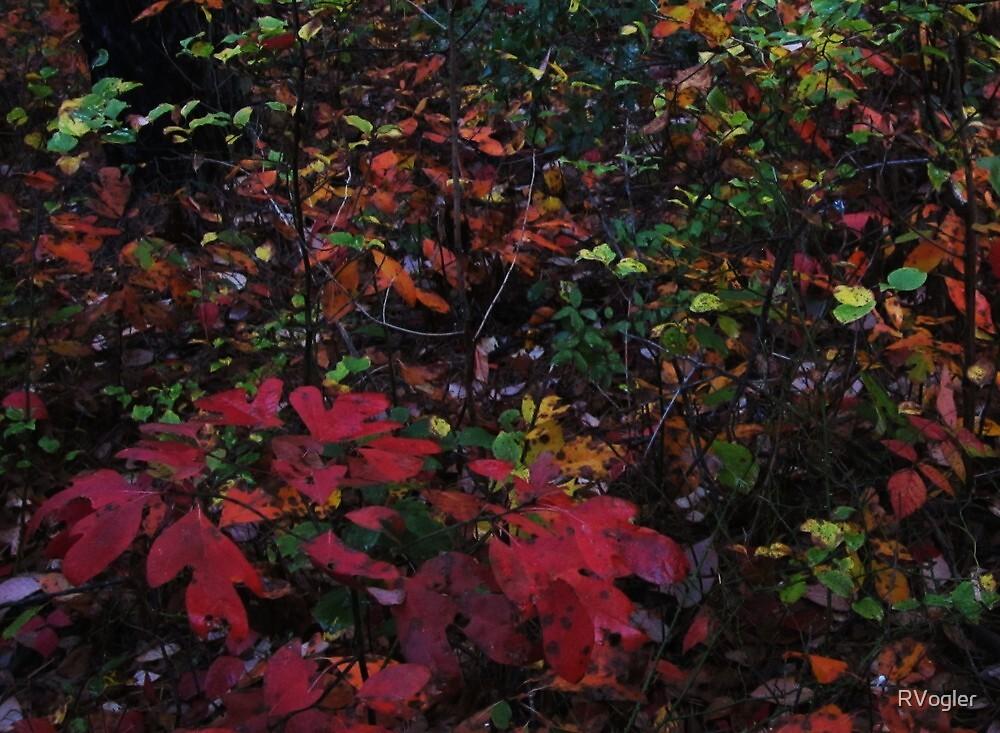 October Rain by RVogler