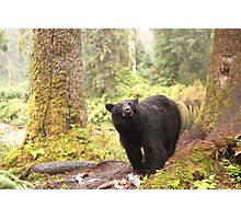 Curious Black Bear Photographic Print