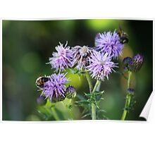 Thistles and Bees Poster