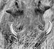 Tusk Tusk by Michael  Moss