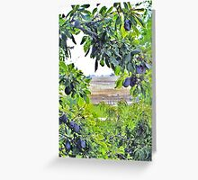 Framed by Nature Greeting Card