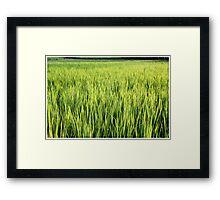 scenic farm Framed Print