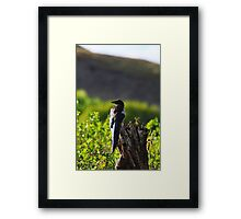 Magpie in the Park Framed Print