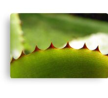 spiked I Canvas Print