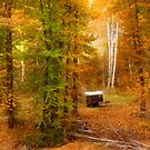 Memories of seasons past by John Poon