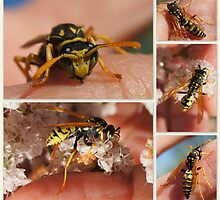 GETTING IN TOUCH WITH A PAPER WASP by Betsy  Seeton