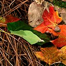 Autumn Leaves by Phillip M. Burrow