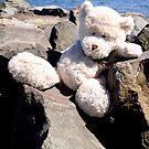 Bear on the Rocks by Nicki Baker