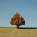 The Lonely Tree by GRoyer