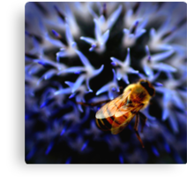 Buzz V Canvas Print