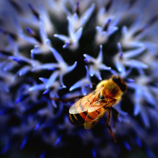 Buzz V by Damienne Bingham