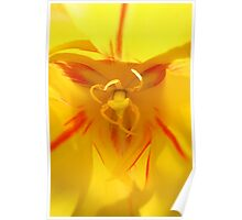 Yellow and Orange Tulip Poster