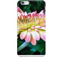 Breast Cancer Awareness Gerber Daisy iPhone Case/Skin