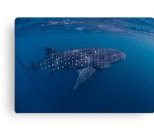 Giant from the Deep, Ningaloo, Western Australia Canvas Print