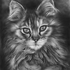The Calico Kitten by Peter Williams