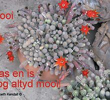 Rooi /Red by Elizabeth Kendall