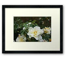 Close up flower 2 Framed Print