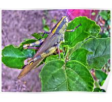 colorful grasshopper Poster