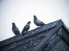 Three Pigeons on a Roof by Artberry