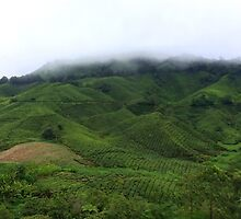 Cloudy Tea Farm by Baha Mosa