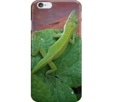 Green Anole iPhone Case/Skin