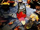 Leaves in the River  by Marcia Rubin
