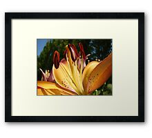 Lily Flower art prints Orange Floral Lilies Framed Print